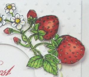Berry Best Wisher-Strawberries2 closeup