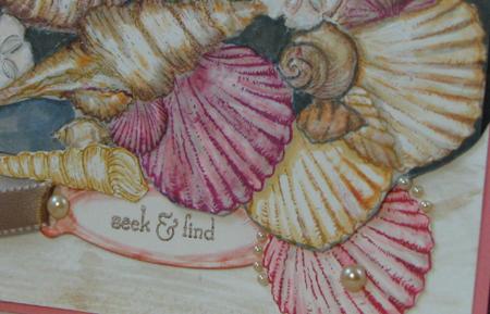 Sea Shells up close-A